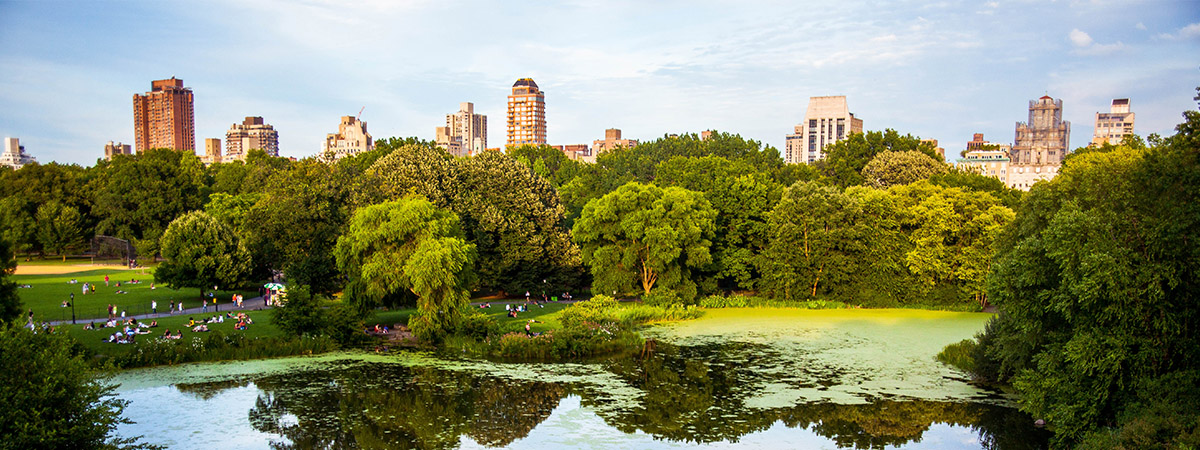 Central Park during the summer in New York City | Top 5 things to do in NYC this summer