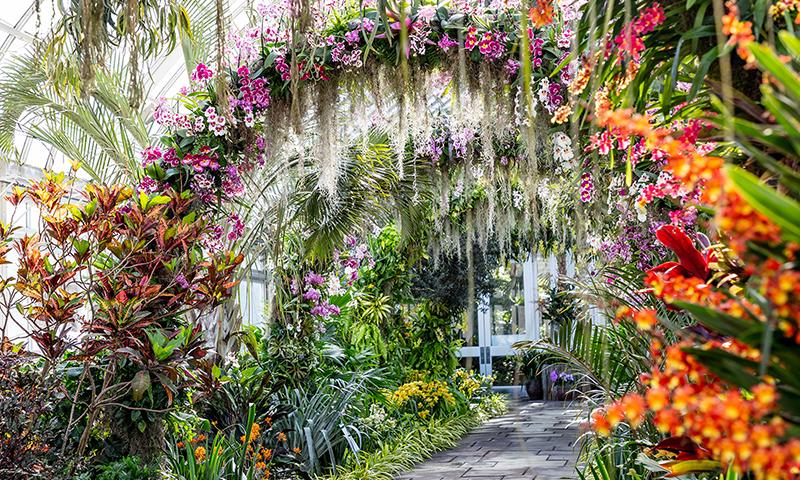 New York Botannical Garden